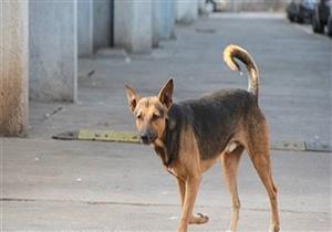 كلب ضال يمنح الدفء لراكب دراجة مصاب في جبال رومانيا لحين إنقاذه