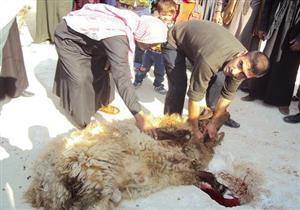 علي جمعة: لا يجوز إعطاء الجزار جزءاً من الأضحية مقابل عمله