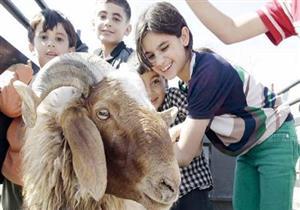 """4 مخاطر للعب الأطفال مع """"خروف العيد"""".. طبيب جلدية يحذر"""