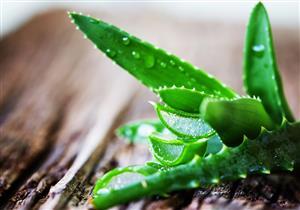 هل يمكن علاج عقم النساء بالأعشاب والوصفات الطبيعية؟
