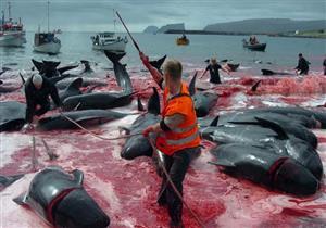 أستراليا واليابان تتفقان على تجاوز خلافاتهما بشأن صيد الحيتان