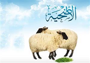 هل يجوز الاشتراك في ذبيحة للوليمة بنية الأضحية؟.. البحوث الإسلامية يجيب