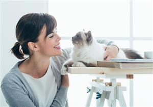 هل تربية القطط تصيبك بالأمراض؟