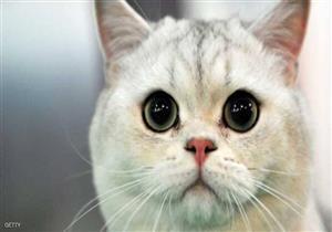 """قطة تعثر على """"كيس مخدرات""""..والشرطة: """"دعوكم من الكلاب علينا أن نستعين بالقطط """""""