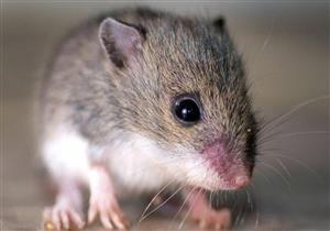 """إنذار كاذب.. """"فئران"""" تتسبب في استدعاء الشرطة لأحد البنوك"""