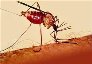 ينتقل عن طريق لدغات البعوض.. إليك أسباب وأعراض الإصابة بالملاريا