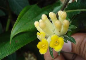 باحثون يكتشفون نبتة سحرية تعالج السمنة ومضاعفاتها