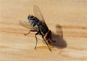 لتجنب الإصابة بأمراضه.. 11 طريقة لتحصين المنزل من الذباب