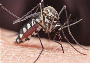 """""""الصحة العالمية"""" تكافح حمى الضنك بتعقيم البعوض"""