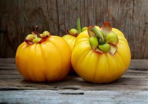 فاكهة التخسيس.. إليك فوائد وأضرار الجارسينيا على الصحة