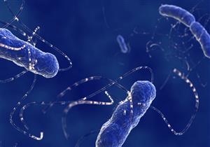 بكتيريا الأمعاء تقلل من خطر الإصابة بأمراض القلب