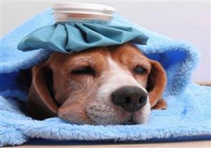"""خطيرة ومميتة.. تحذيرات عالمية من """"إنفلونزا الكلاب"""""""
