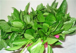 هل تختلف فوائد الملوخية الخضراء عن الجافة على الصحة؟
