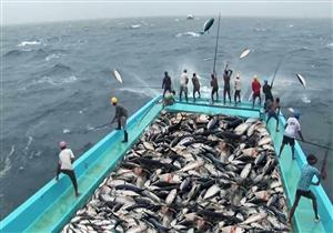 البلوك تشين.. تطبيق ذكي يكشف عن سلامة الأسماك قبل شرائها