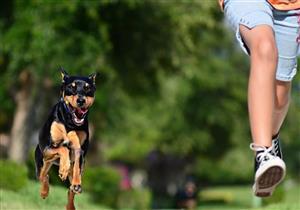 تقرير يكشف: إصابة نصف مليون شخص سنويا بعضات الكلاب في مصر