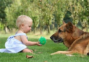 الكلاب تهدد طفلك بأمراض خطيرة.. 5 نصائح احرص عليها عند تربيتها