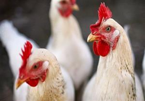 بالتعديل الوراثي.. طريقة جديدة للحد من انتشار إنفلونزا الطيور