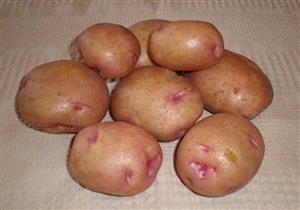 خبير يحذر: أضرار جديدة في البطاطس ذات النقاط الوردية والبقع الخضراء