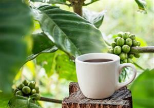 كيف تساعد القهوة الخضراء في إنقاص الوزن؟