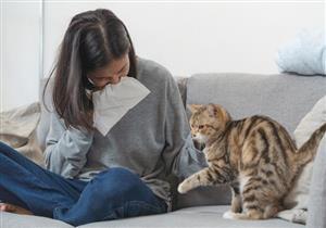 تربية القطط قد تصيبك بالحساسية.. 7 أعراض تكشف عنها