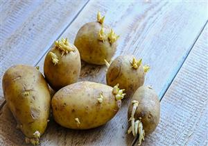 احذري البطاطس ذات البراعم.. تهدد أسرتِك بمخاطر جسيمة تصل للوفاة