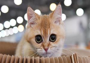 باحثون: الحساسية الناجمة عن الحيوانات الأليفه تقي من كورونا
