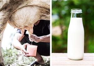 يحتوي على بكتيريا خطيرة.. 10 أضرار يسببها الحليب الخام لصحتك