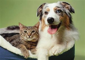اكتشاف أجسام مضادة لفيروس كورونا لدى القطط والكلاب