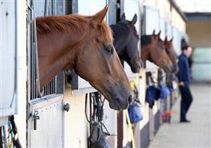 يعتمد على الأجسام المضادة للخيول.. كوستاريكا تجرب علاجًا جديدًا لكورونا