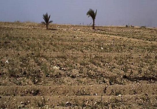 تخصيص 2704 قطعة أرض لشباب الخرجين بالوادى الجديد
