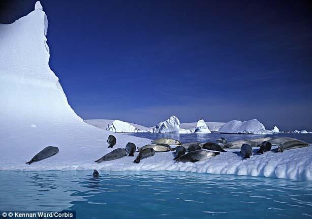 دراسة: حرارة القطب الجنوبي ترتفع أسرع من بقية العالم