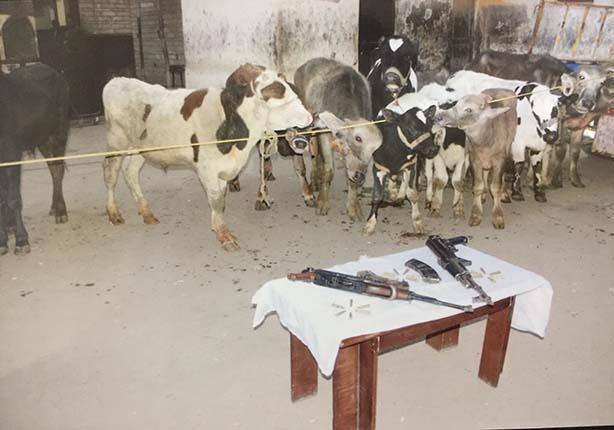 بعد 3 وقائع.. سقوط عصابة سرقة الماشية في سوهاج