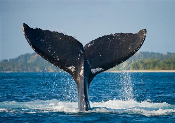 دعاء سيدنا يونس وهو في بطن الحوت.. قصته وفضله