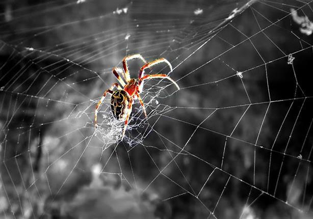 الإفتاء: قصة نسج العنكبوت على الغار في حادثة الهجرة صحيحة وثابتة بالأدلة