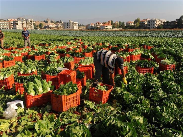 تعرف على آليات تسعير المحاصيل الزراعية