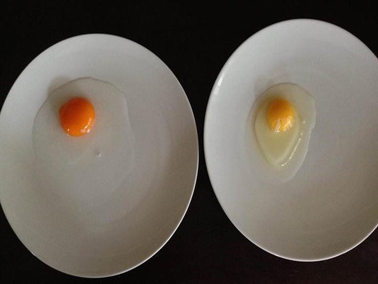 لماذا تختلف درجات ألوان صفار البيض؟