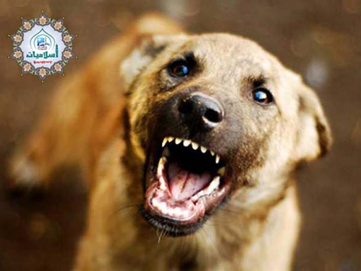 جاري يربي كلابًا تؤذينا فهل يجوز لي قتلها؟
