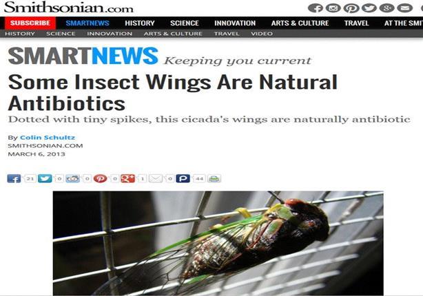 دراسات عالمية تأكد سٌنة نبوية.. معجزة طبية في جناح ذبابة