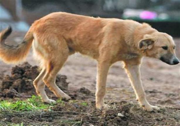 كلب ضال يعقر 8 بينهم 5 أطفال في قنا