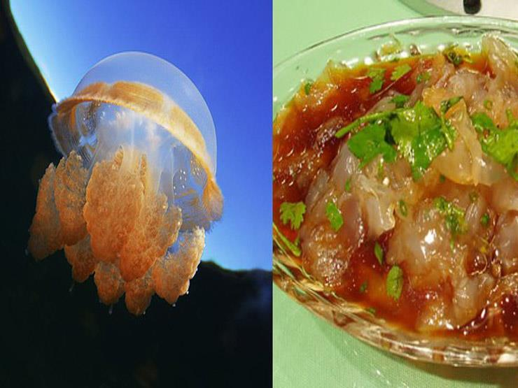 ما لا تعرفه عن قنديل البحر.. وجبة شهية في هذه الدول