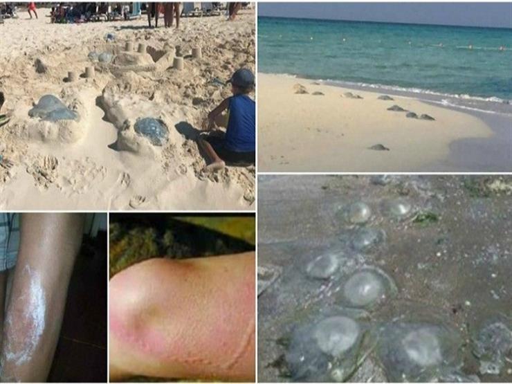 أستاذ بيئة: لا علاقة بين انتشار قناديل البحر في مصر و قناة السويس الجديدة