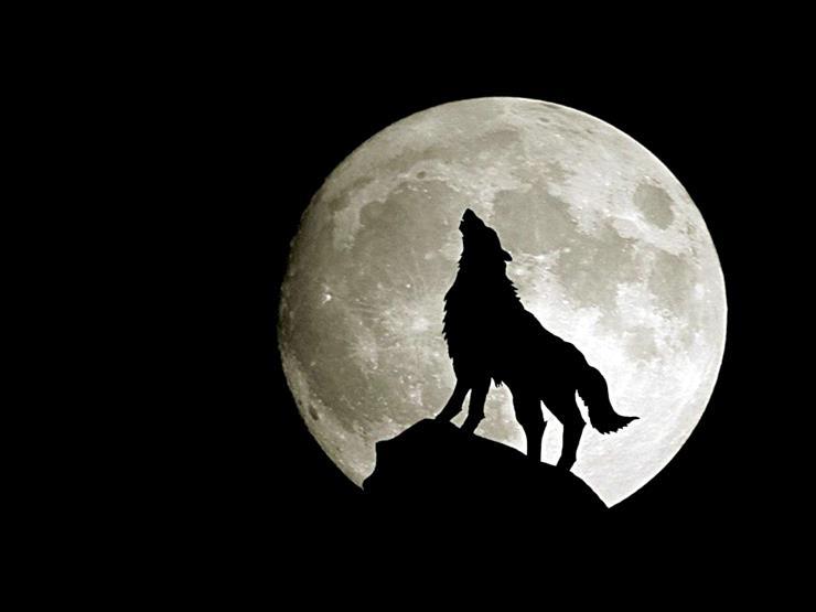 """لأول مرة في 2019.. كيف يمكن لسكان القاهرة مشاهدة """"القمر الذئب""""؟"""