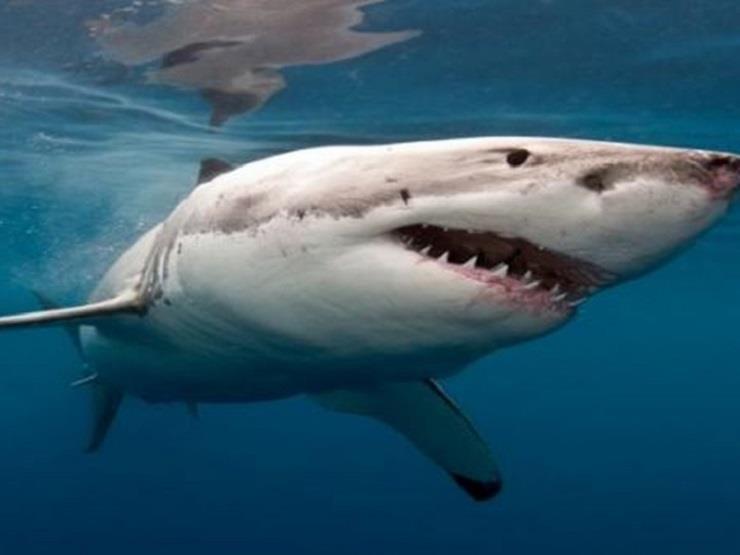 سمك السلور سمك القرش حوض السمك - إرشادات مفيدة على محتوى أسماك القرش حوض  السمك