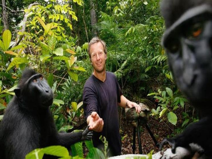 """حسم الملكية الفكرية لـ""""سيلفي القرد"""" بعد نزاع قضائي استمر عامين"""