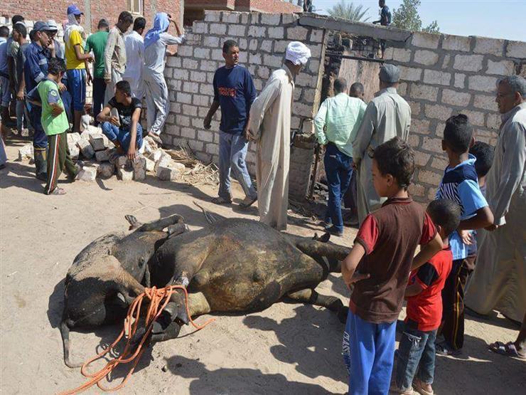السيطرة على حريق في حظيرة ماشية بسوهاج
