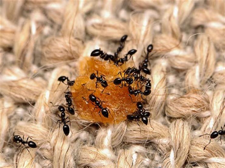 بعيدًا عن المساحيق.. وصفات طبيعية للتخلص من الحشرات في منزلك