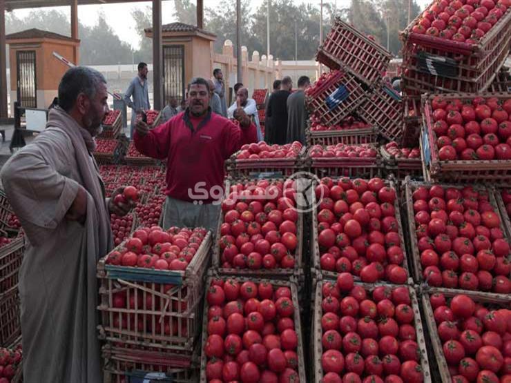 ارتفاع الطماطم.. أسعار الخضر والفاكهة في سوق العبور اليوم