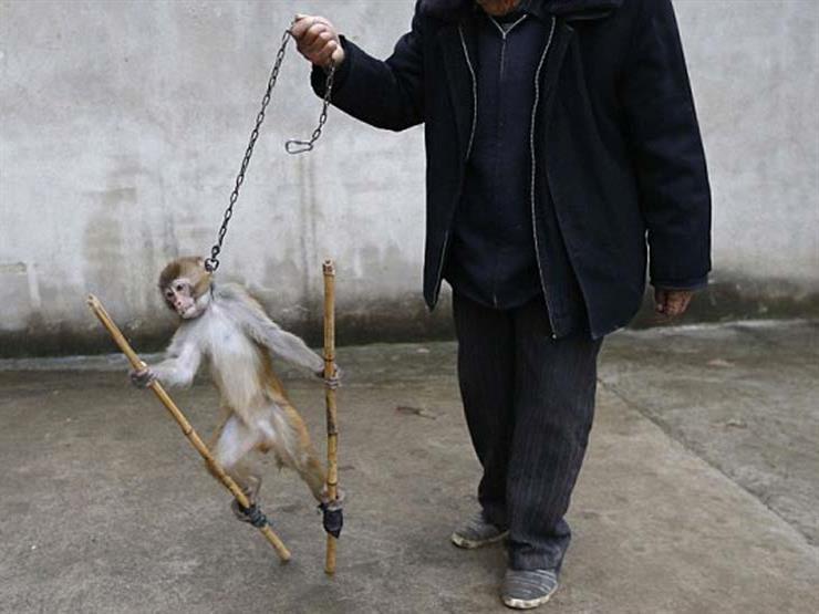 الشيخ رمضان عبد المعز يوضح حكم تعذيب الحيوانات