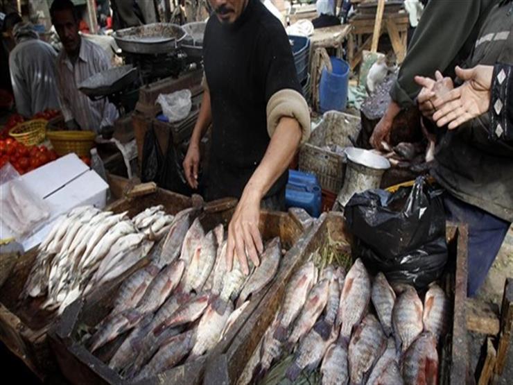 أسعار السمك البلطي ترتفع بسبب زيادة الطلب.. واستقرار البوري والجمبري