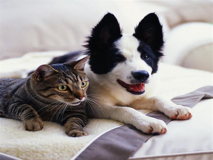 احذر النوم بجانب قطتك أو كلبك المفضل